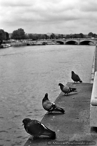 Four Pigeons at the Seine